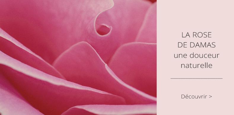 La Rose de Damas, une douceur naturelle